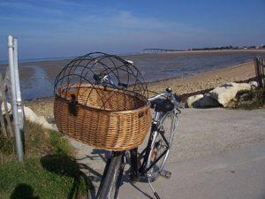 Panier chien_Fun Cycles_Rivedoux
